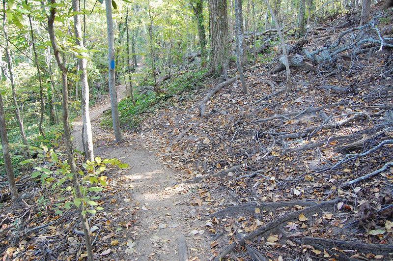 """That mass of roots uphill to the right are what's left of the base of """"Teflon Hill."""" It was abandoned/closed in 2004 for the bench-cut section ahead."""