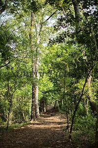 Banita Creek  (19)