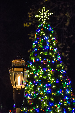 Cotati Tree Lighting 2016