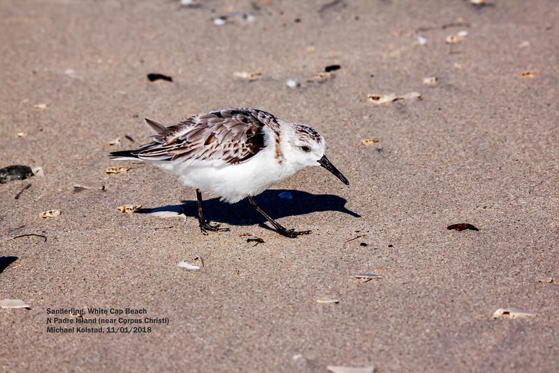 IMG_8589 3T Sanderling White Cap Beach N Padre Island.jpg