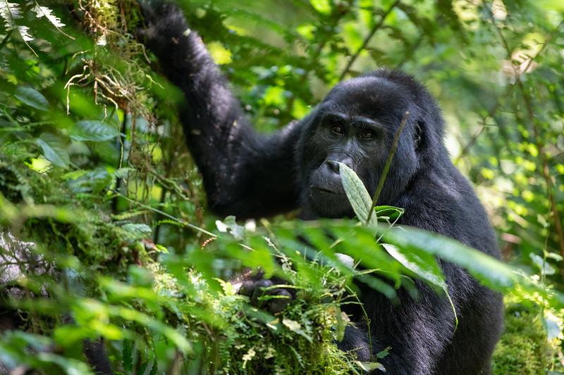 Uganda_T_Gor-561.jpg