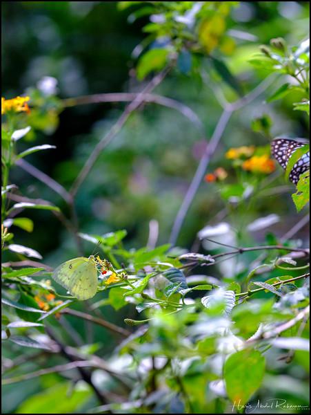 200104 KL Butterfly Park 39.jpg