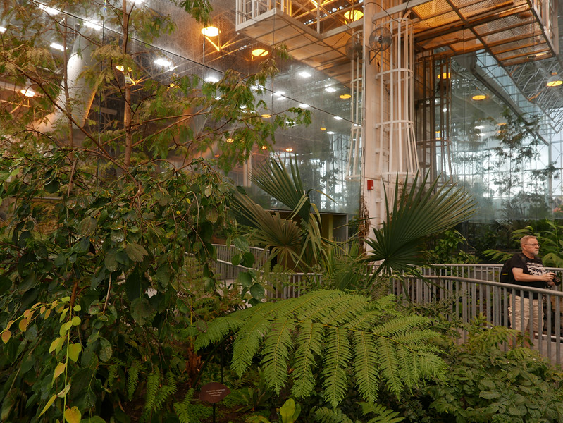 The Museum's Tropical Forest