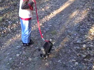 Video of Virginia Walking on Leash