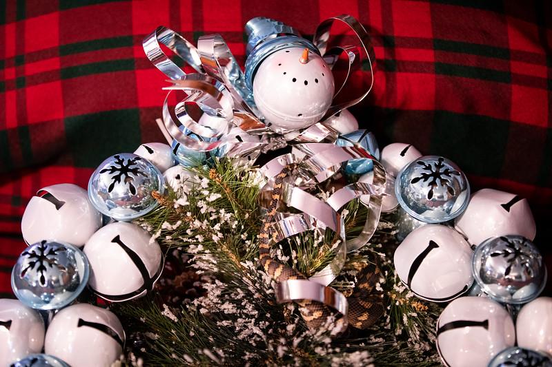 ChristmasSnakes19_0001.jpg