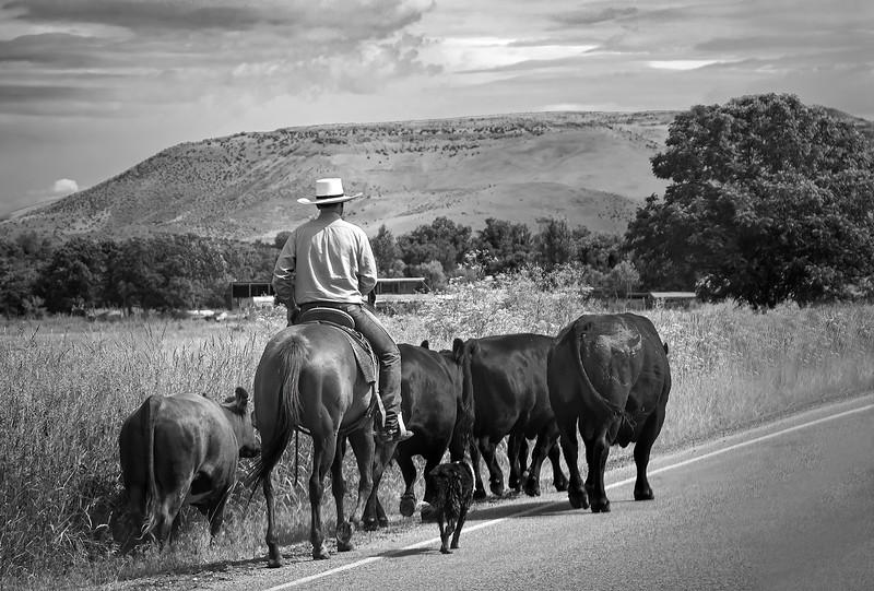 012.Ruthann Greene.1.Driving a Little Herd.AS.jpg