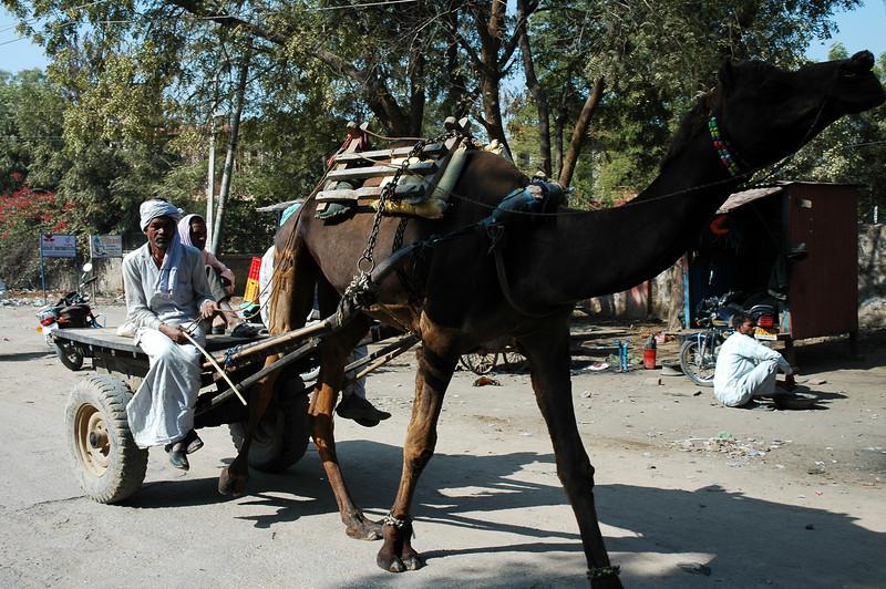 India 2009-066.jpg