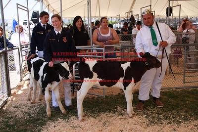 2012 LHVCF Market Calves