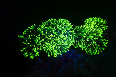 Maldives Fluo Diving