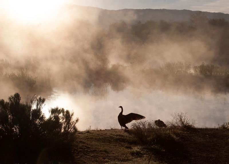 Misty Sunrise and Geese_5.14.17.jpg