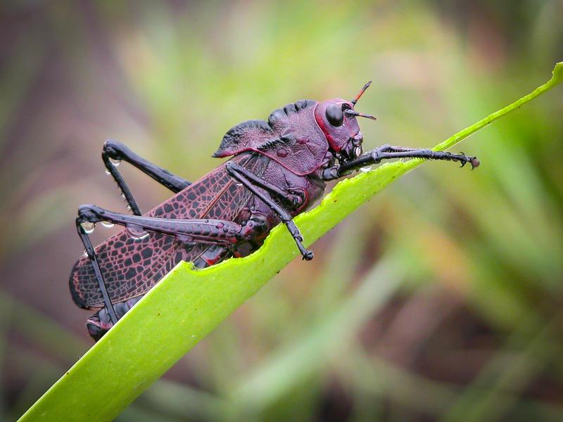 118 Cicada.jpg