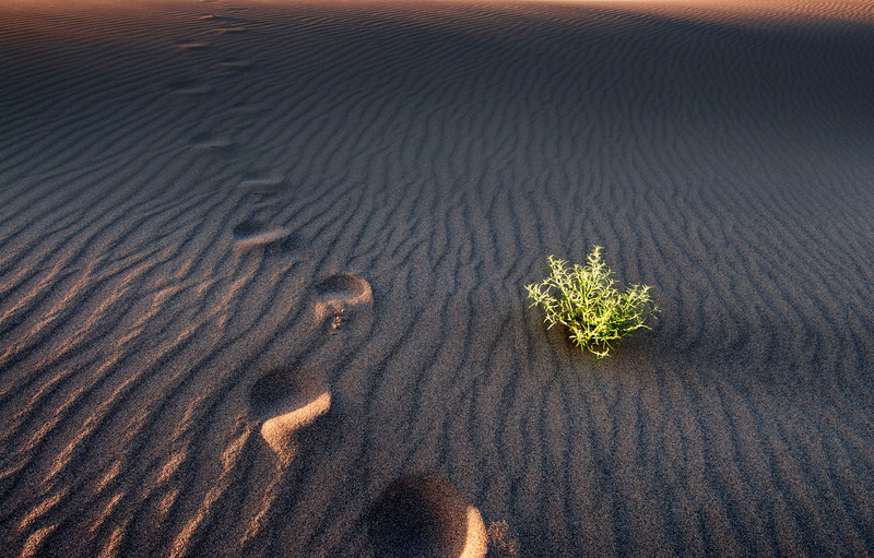 Walking Through Time, Bruneau Dunes - Idaho  Small plants flourish in the bottomless shifting sand - enduring the heat of day, the cold of night, and the ever present wind. Here, nature has learned to grow deep roots in a relentless search for moisture and stability.