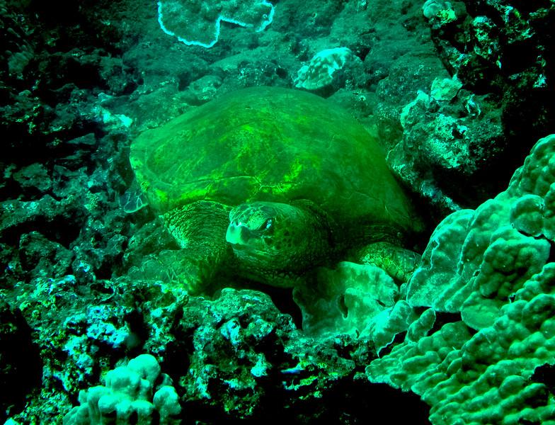 Hawaii diving - 029.jpg
