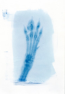 Cyanotype Pet X Rays