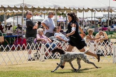 GSP 2014 Southern California Sporting Dog Fanciers