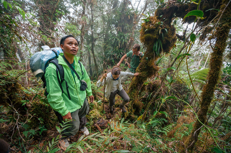 Local guide Sukaibin Sumail (right) studies the way ahead to a previously unexplored ridge on Mt Kinabalu, with biologists Rachel Schwallier and Merlijn Jocqué in tow.