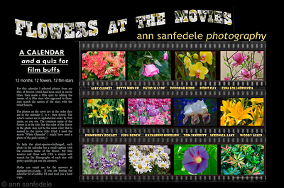 Flowers At the Movies - NEW for 2015