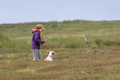 Grouse Counting 2019