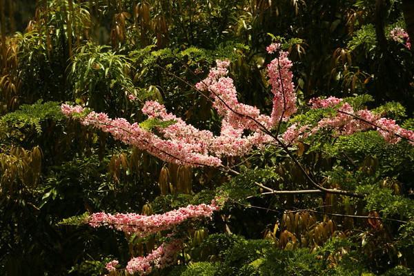 Flora Fauna_0005.JPG