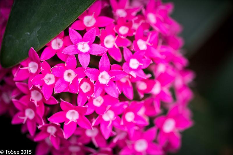 Fleurs 2015