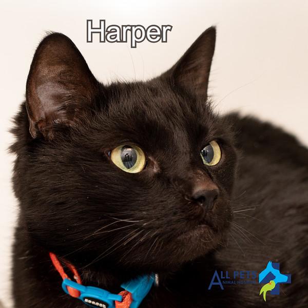 Harper Dr. Cooks cat.jpg