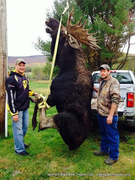 "2014 - Todd Baxter, Lamoille Co., Archery, 916 lbs., 138 1/8, 43 5/8"" spread."