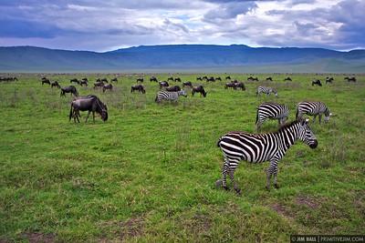 Africa 2008 - Climbing Kilimanjaro and Safari