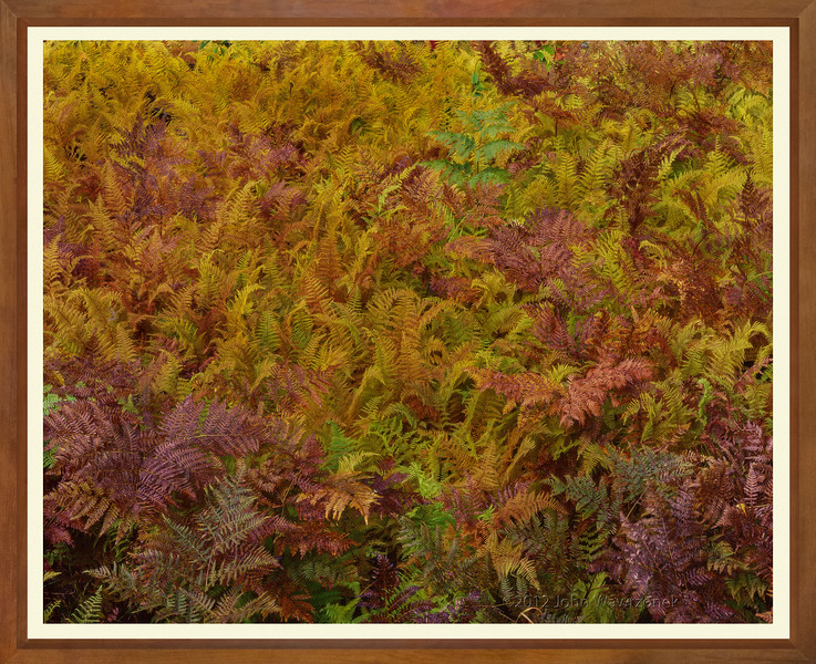 Golden Road, Baxter State Park, Maine. October 1991, gcat. JW 5372