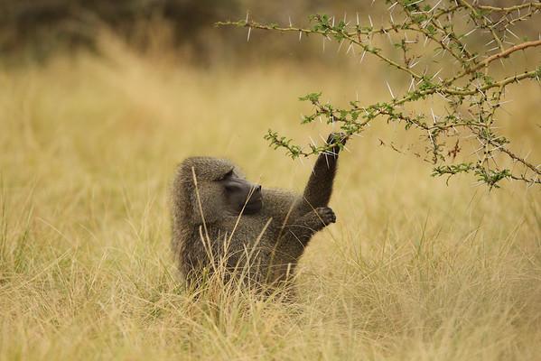 East Africa, Serengeti and Zanzibar - Ngorongoro Crater Lodge