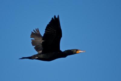 Titusville Bird Island
