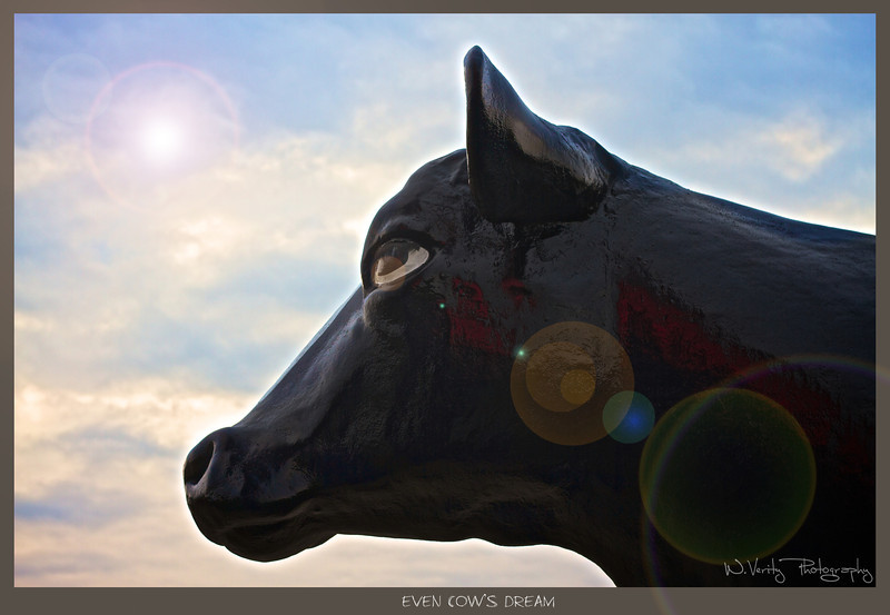 cowb2.jpg