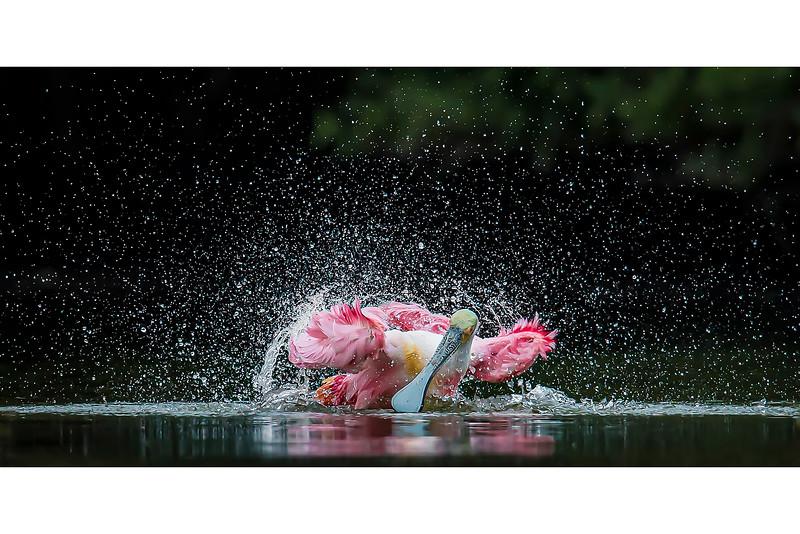 Bathing Fury