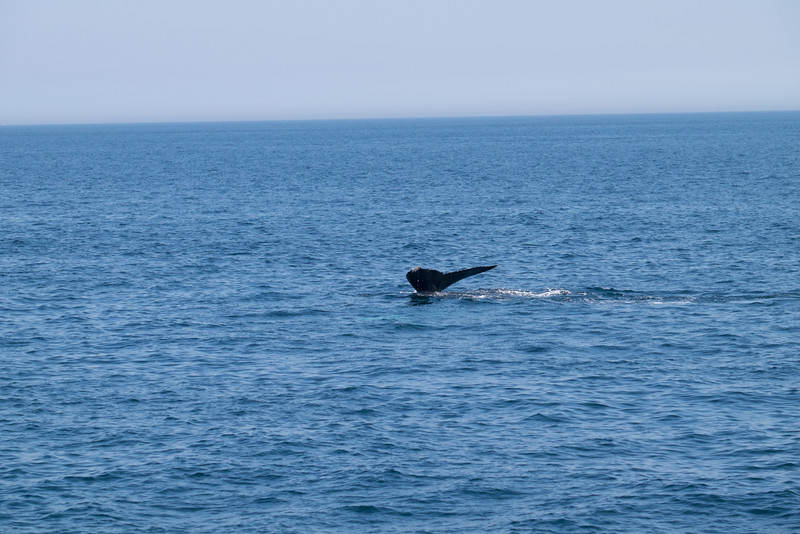 humpbacks-6292.jpg