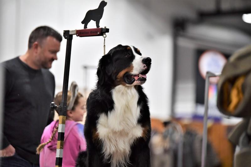 dogshow24.jpg
