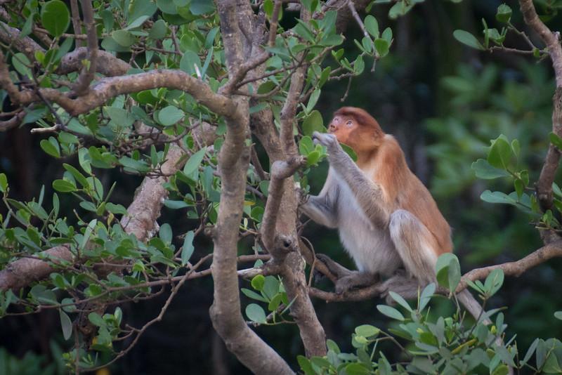 Borneo-2014-216.jpg
