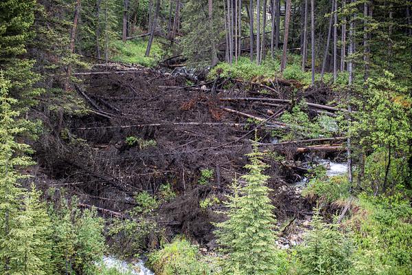 7-1-20 D6 Creek Flood - Damaged Tress KC