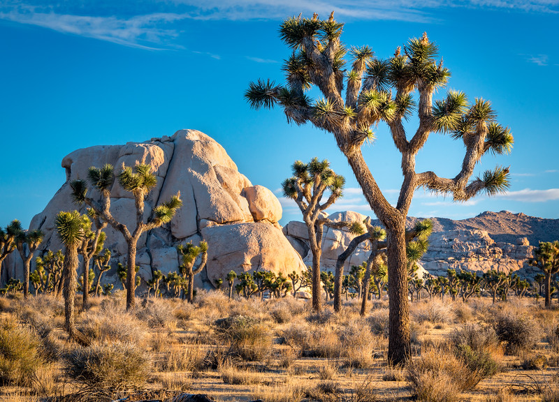 Joshua Tree and Intersection Rock