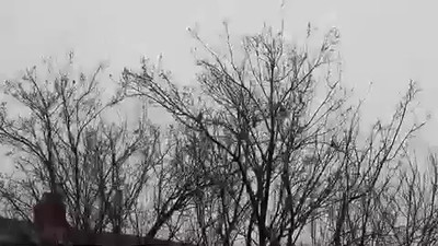 Backyard_Birds-01.mov