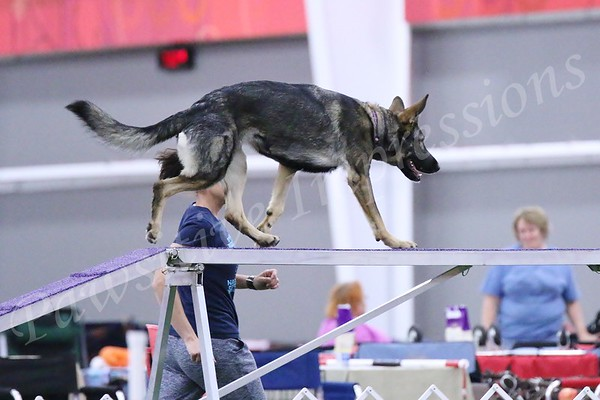 GSDCA All Breed Novice Standard Agility Sat 10 10 15