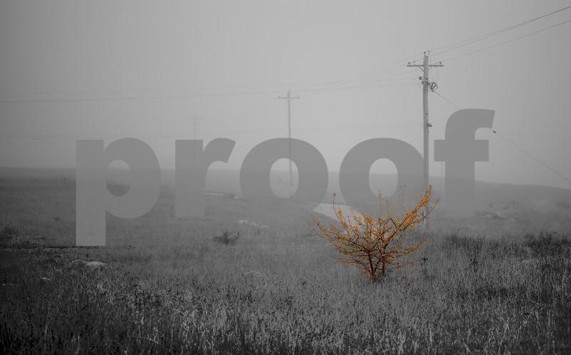 fog history aware c.jpg