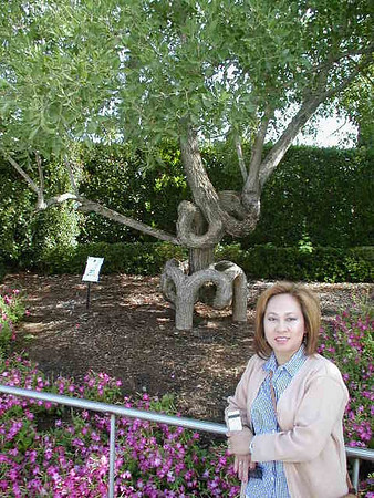 2001 Bonfonfe Gardens
