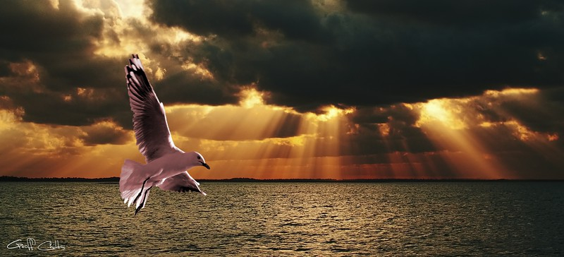 Silver Gull & God Clouds - Sunset at Sea. Original east Australian photo art.