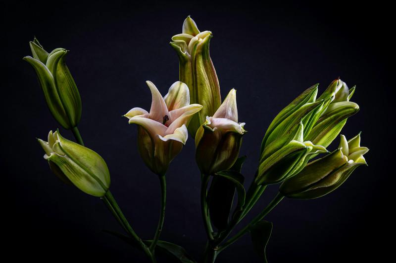 Botanicals03182020-064.jpg