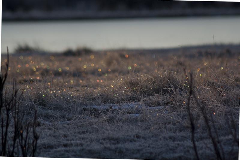 w_MG_0028-Fairy-Sparkles.jpg