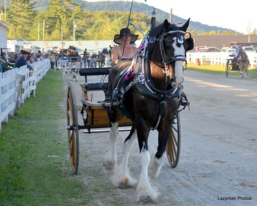 12 Friday, August 23, 2013 Draft Horses Ladies