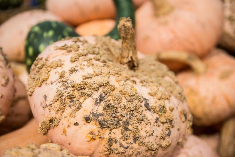 Gnarly looking pumpkins