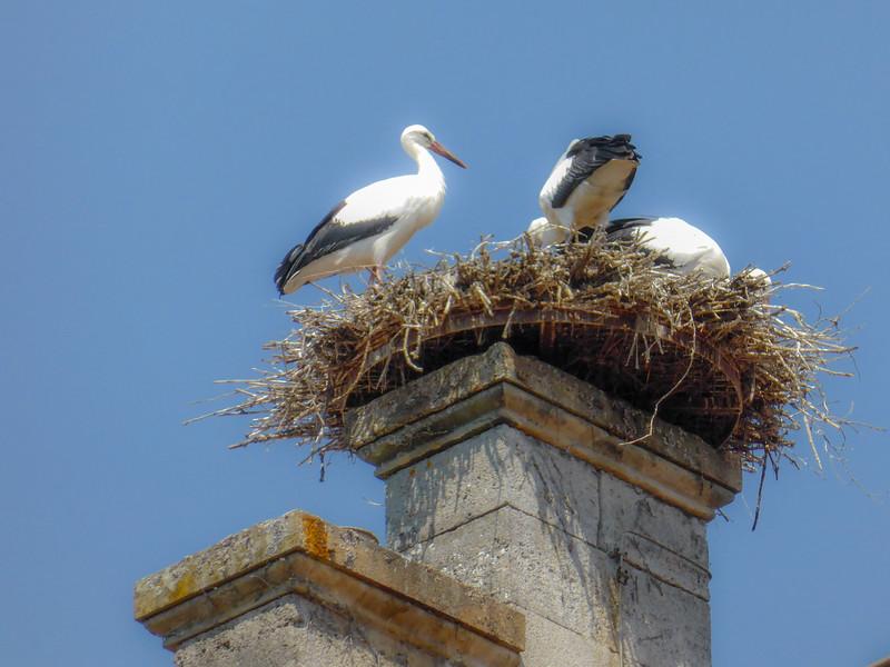 Storkes in Rothenburg