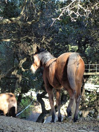 Horses - 2009-01