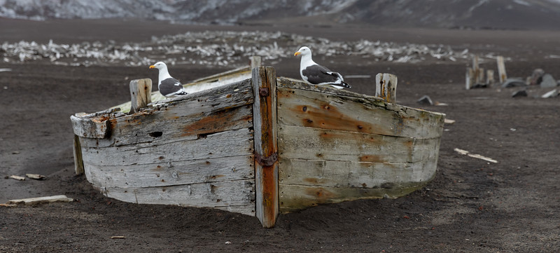 2019_01_Antarktis_02192.jpg