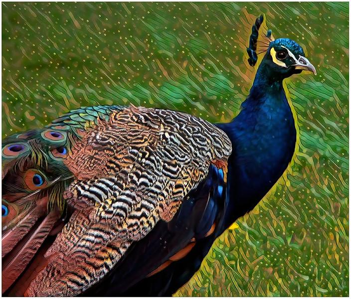 PAVONE-parrot-draw-k2_output.jpg